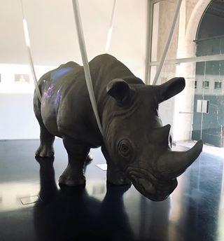 Lonesco il Rinoceronte e Roma #gztravels